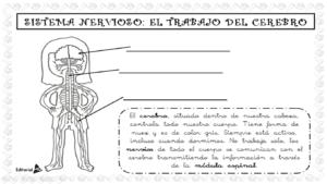 actividad del sistema nervioso