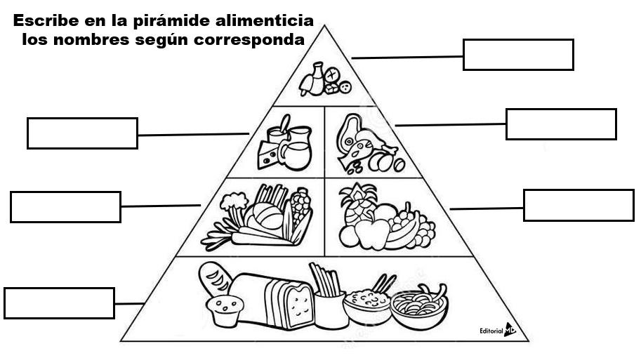 Actividades piramide alimenticia