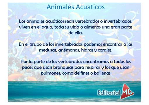 Animales acuaticos 02