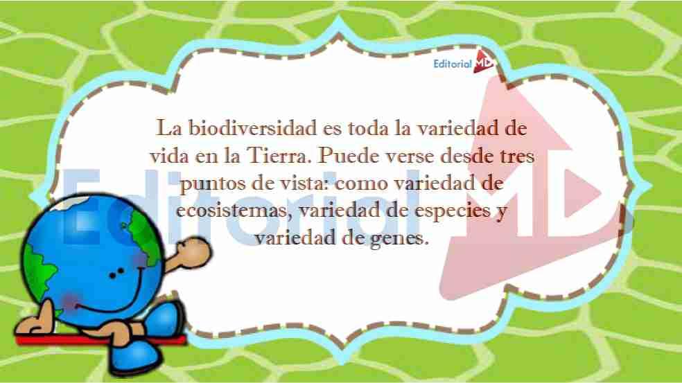 Biodiversidad y sus Características para Niños de Primaria