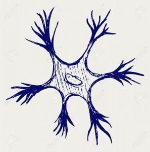El papel de las neuronas