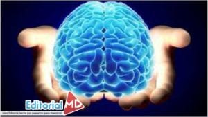 Función del Cerebro