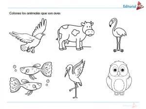 aves ejercicios para niños