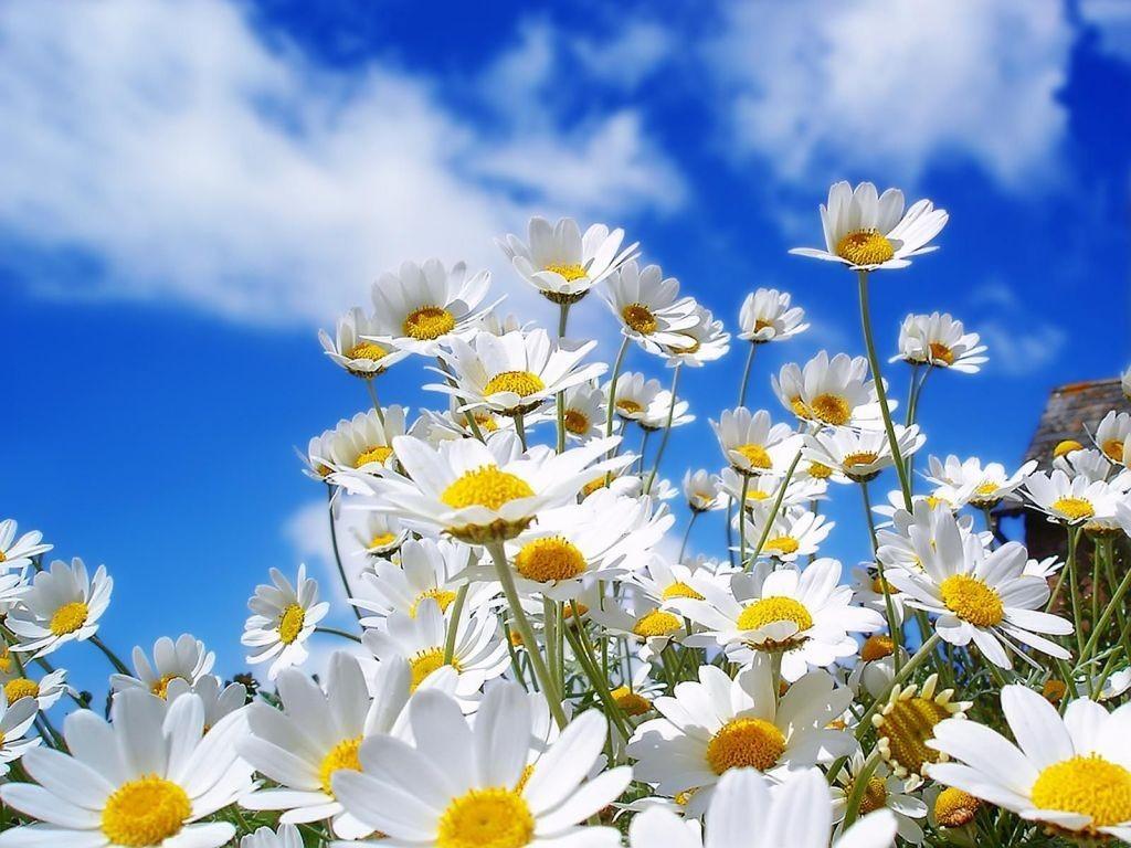 Manualidades Vistosas.3 Divertidas Manualidades Flores Para Recibir La Primavera