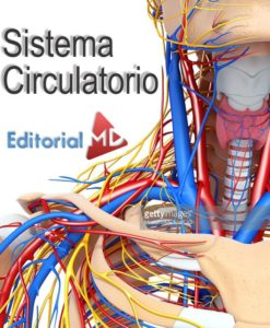 sistema-circulatorio-humano-y-su-funcion