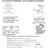 actividades de Cuarto grado de primaria4