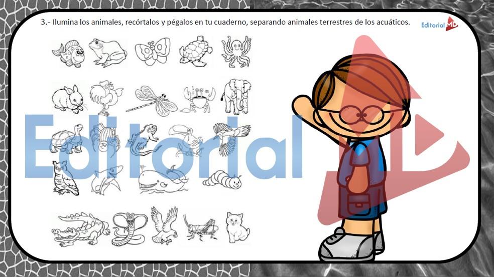 ejemplo de los animales explicado para los niños