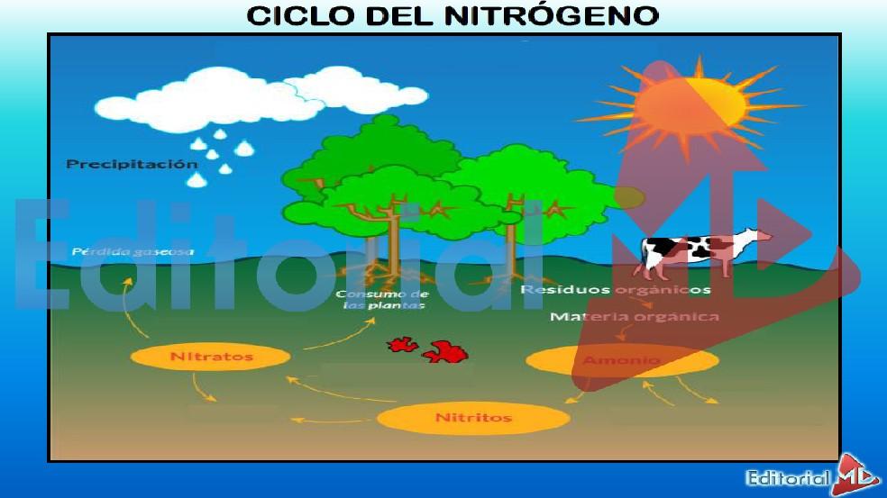 ciclo-del-nitrogeno