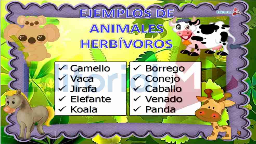 Increíble Imagenes De Animales Carnivoros Herbivoros Y ...