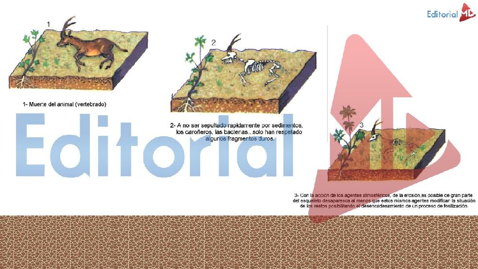ejemplo-de-fosilizacion