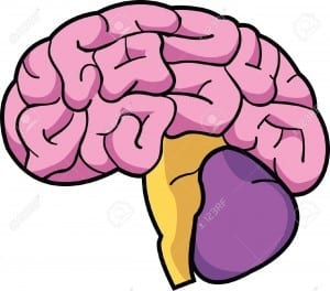 el cerebro y su aprendizaje