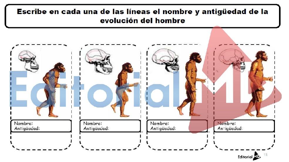 evolucion-del-hombre-etapas
