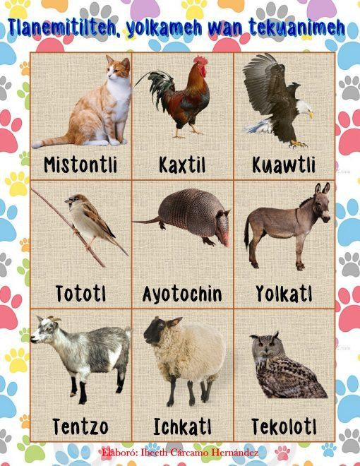 lotería de animales en nahuatl