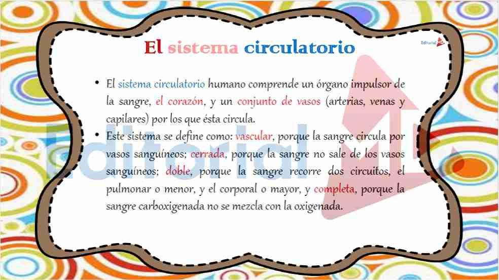 sistema-circulatorio