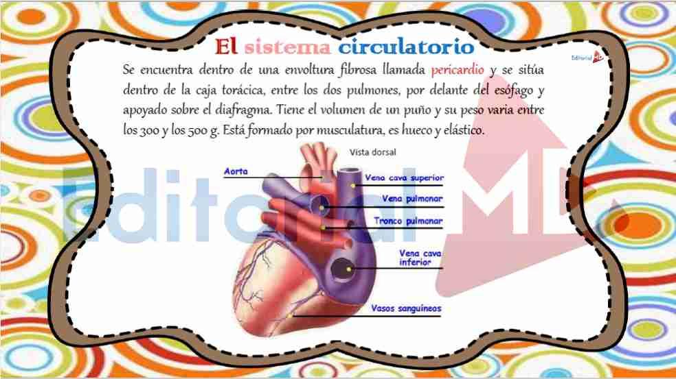 sistema-circulatorio-humano